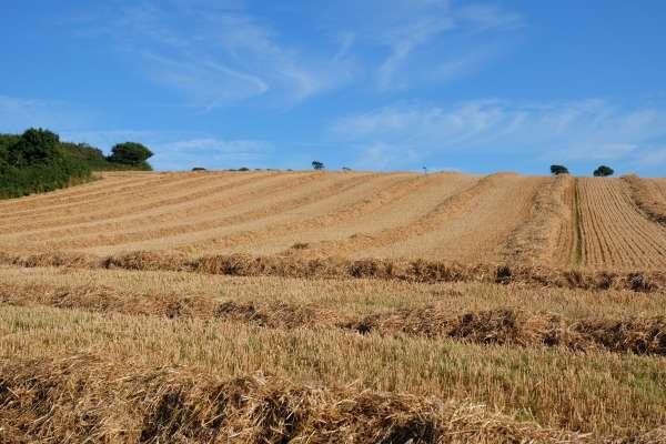 Chillington Fields