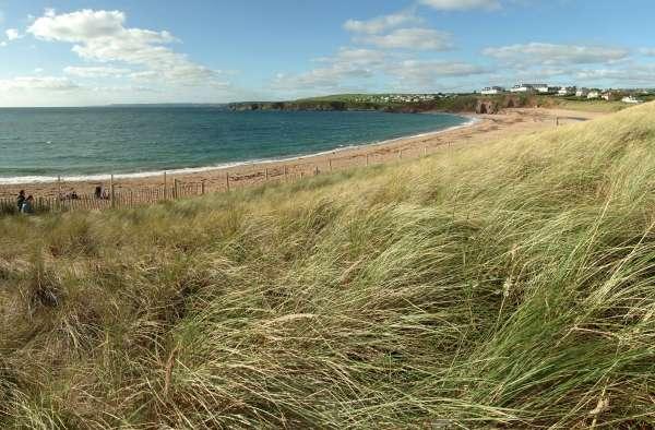 South Milton Sands Beach Grass