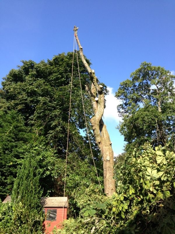 Pittman Trees Tree Surgeons Amp Forestry Contractors