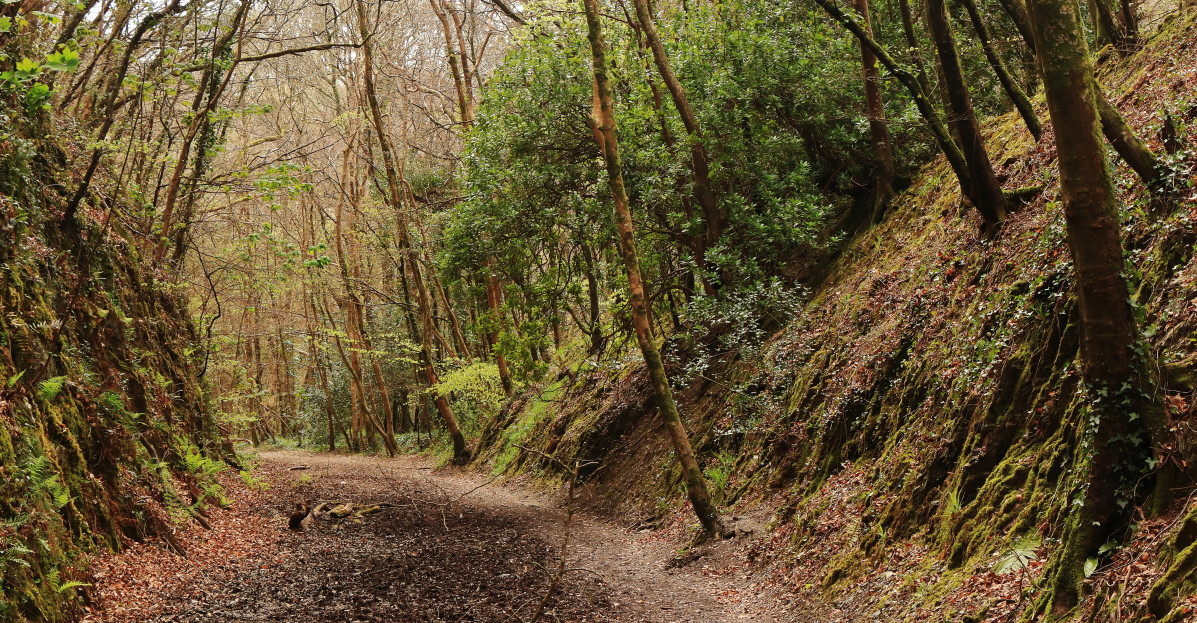 Local opposition to trail scheme builds with environmental and feasibility concerns