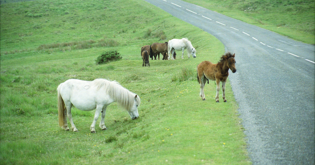 """Pony killed on Dartmoor, police call for """"moor care"""""""