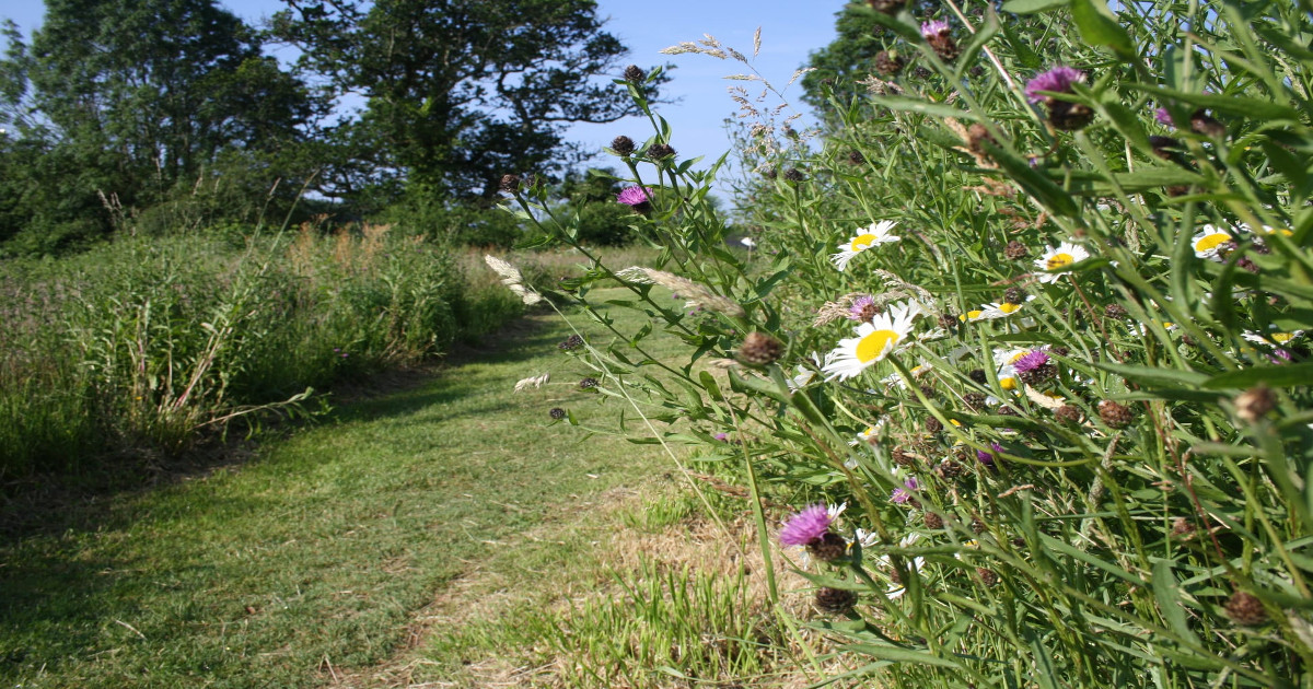 """""""Overwhelming support"""" for SHDC's rewilding plans"""