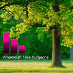 Woodleigh Tree Surgeons