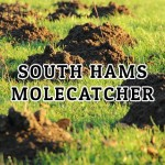 South Hams Molecatcher - Kingsbridge
