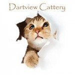 Dartview Cattery - Stoke Gabriel