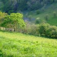 Challon's Combe Organics - Aveton Gifford