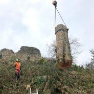 Dart Forest Trees - Lifting Large Cute Tree Stump