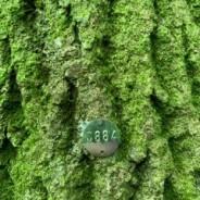 Dart Tree Consultancy