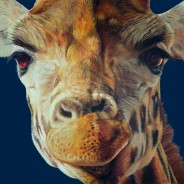 Giraffe Steve Bayar - Coombe Gallery