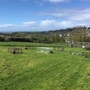 South Hams Small Pet Holidays - Outdoor Runs
