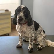 In The Dog House Professional Dog Grooming - Kingsbridge