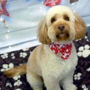 Grooming Gosh - Dog Groomer - Kingsbridge