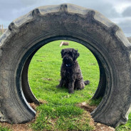 Dog and Dash - Adventure Park for Dogs