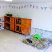 South Hams Small Pet Holidays - Indoor Accomedation