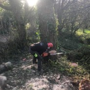 Dart Forest Trees - Cutting Tree