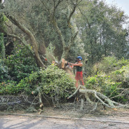 Hanzon Landscaping and Tree Surgery
