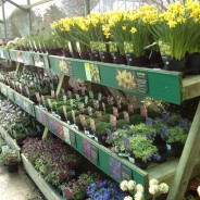 Gardentime Garden Centre - Dartmouth