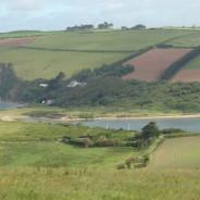 Devon Wildlife Management