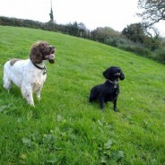 The Dog Lodge - Luxury Dog Boarding in South Devon - Slapton
