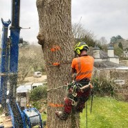 Dart Forest Trees - Cutting Large Tree