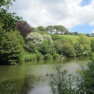 Coombe Water Fishery