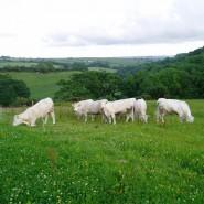 Mary Mills Farm - Accommodation Kingsbridge