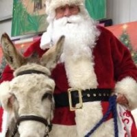Ivybridge Donkey Sanctuary Christmas Fair