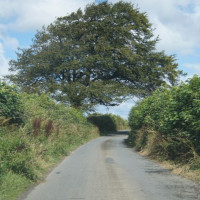 Advice for driving in the South Hams lanes