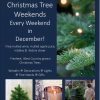 Avon Mill Christmas Tree Weekends