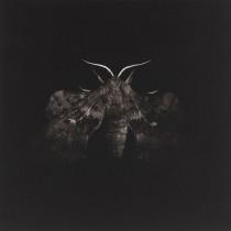 Poplar Hawk Moth - Sarah Gillespie R.W.A. Ltd Ed. Mezzotint. £1,200.