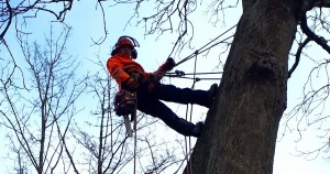 From fireman to tree surgeon: the Modbury-based team to trust when it comes to managing your garden