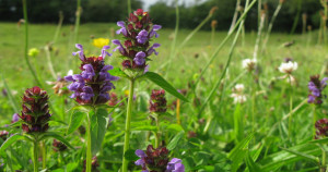 SHDC invites volunteers to get involved with the annual green hay cut to increase biodiversity