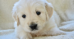 SHDC is asking people to check licenses if they are thinking about buying a puppy