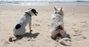 SHDC moves to correct information about banning dogs on beaches