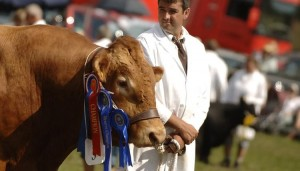 Totnes and District Show