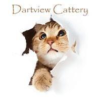 Dartview Cattery - Stoke Gabriel