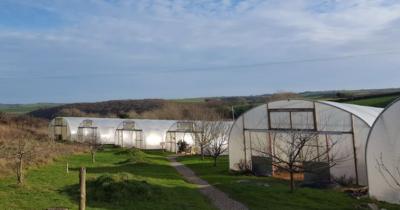 The South Devon Chilli Farm has gone on the market