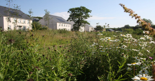 SHDC asks for your opinion on rewilding council-owned land