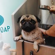 Dog & Soap, Kingsbridge
